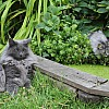 Sylvester and Lucy watching frogs in the pond, July 14