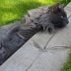 Sylvester, Sept 15