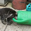 'Malindi with his head in the watering can