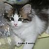 Jigsaw, 8 weeks old.