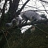 Girls in tree January 2014