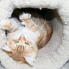 Hummie inside his favourite tunnel on his cat climber